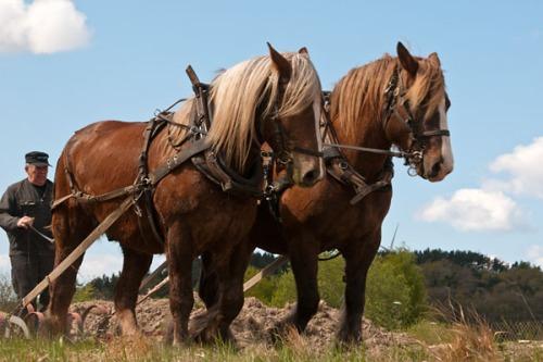 Harvning med häst