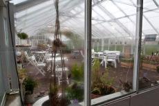 Det börjar bli lite väl kallt i det ouppvärmda växthuset. Foto: I. Berner