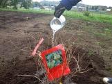 Planteringen av en krusbärsbuske fick inviga de nya odlingslotterna. Foto: S.Krstic.