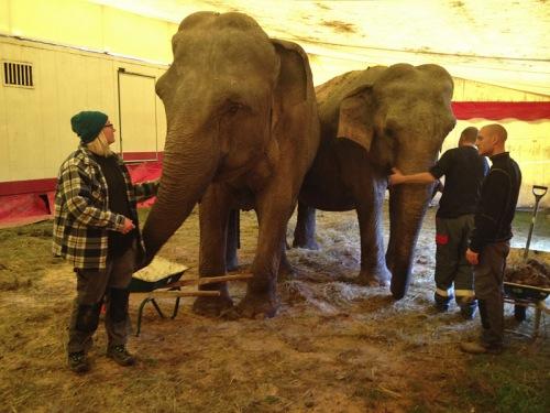 Lärjeån elefanter_Lydia L Söderberg