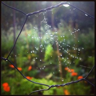 Daggdropparna avslöjar spindelnätet. Foto: Lydia L. Söderberg