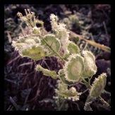 Frostig detalj från ute på fältet. Foto: Lydia L. Söderberg