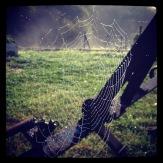 Skimrande spindelnät en tidig höstmorgon på Lärjeån. Foto: Lydia L. Söderberg