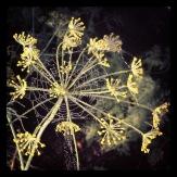Kronan på verket? Spindelnätet pryder blomman. Foto: Lydia L Söderberg