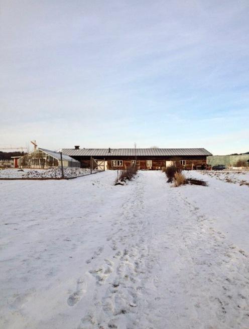 Passa på att njuta av det vackra vintervädret med ett besök på Lärjeån! Foto: Susana Krstic