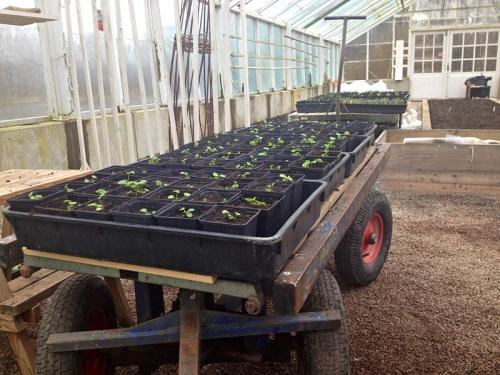 Lärje växthus mars2014 2_LydiaSöderberg