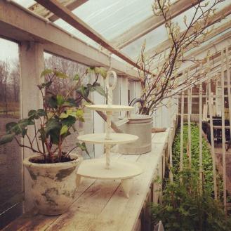 Dags för fika/lunch i vårt växthuse? Foto: Lydia Söderberg