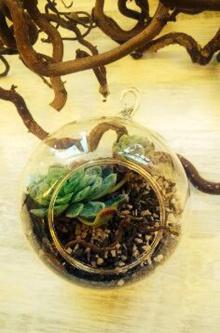 "En ""glaskuleträdgård"" från Kajskjul 46. Pris: 100 kr Foto: Parisa Moghadam"