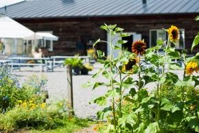 Välkomna att njuta av ett sensommarvackert Lärjeån! Foto: Johanne Pernklint
