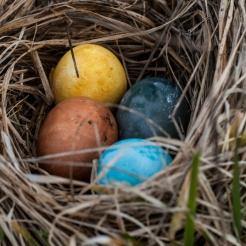 Kanske har påskharen varit på besök? Foto: Johanne Pernklint